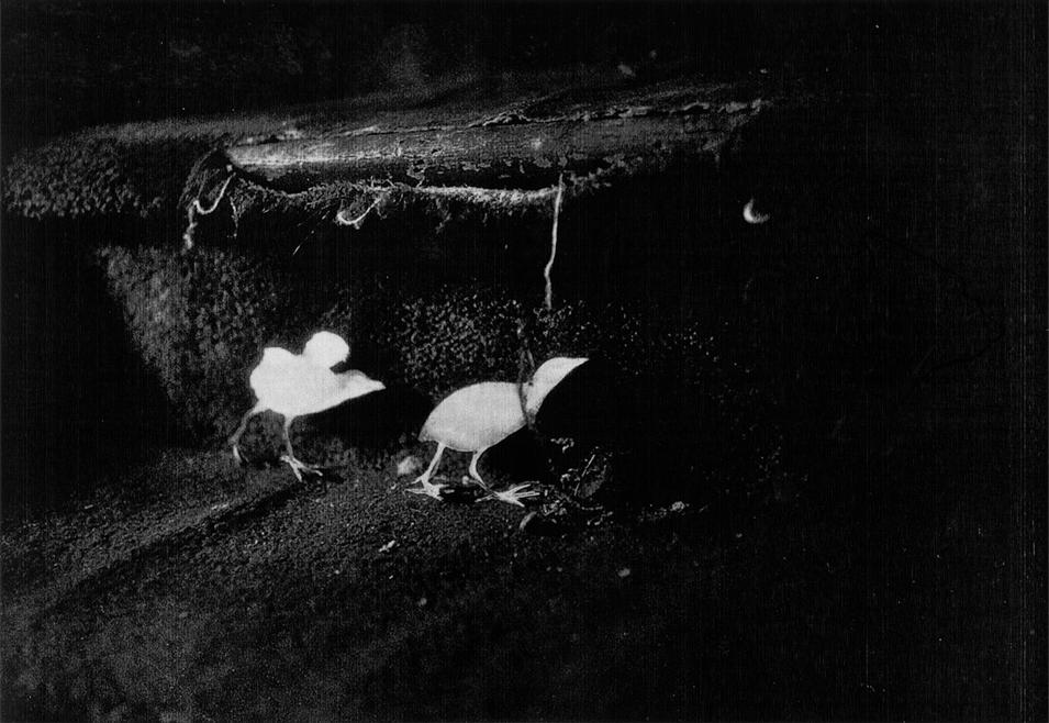 Fernandez_Mike_Birds